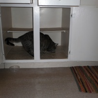 Ellie thinks this empty space is for her, but in reality, it will be home to a dishwasher hopefully soon!